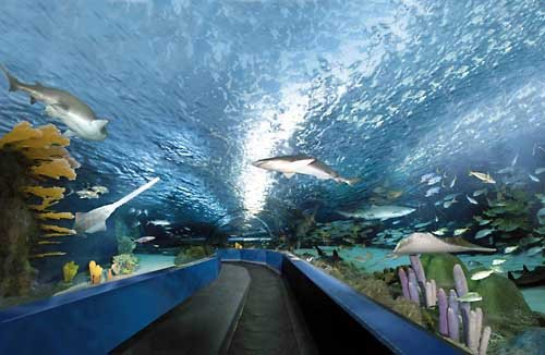 Sleep With the Sharks at Ripley's Aquarium in Myrtle Beach